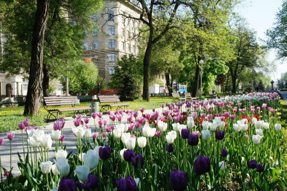 Volgograd tulips