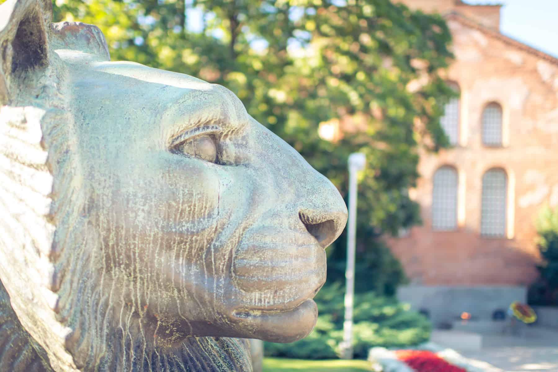 Sofia - Lion